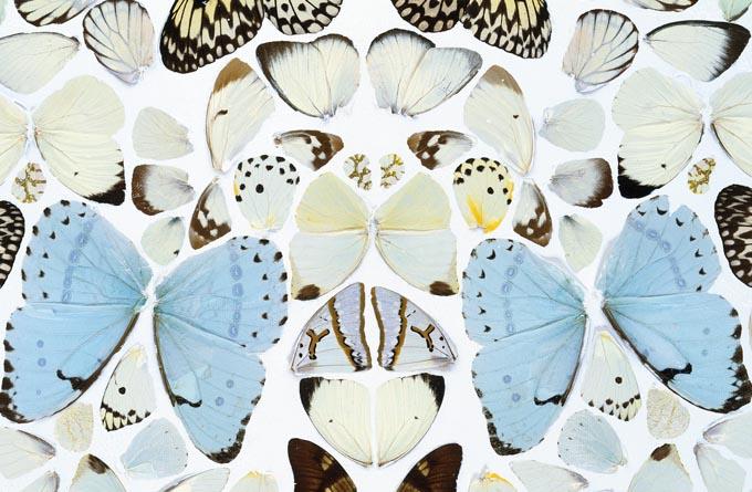 butterfly effect hero