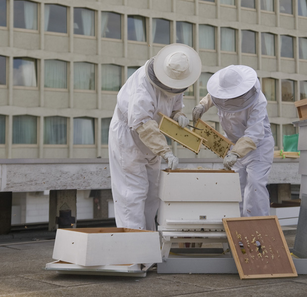 1. Lancaster London Bees 2 - IMAGE MUST BE CREDITED TO RICHARD TWILTON