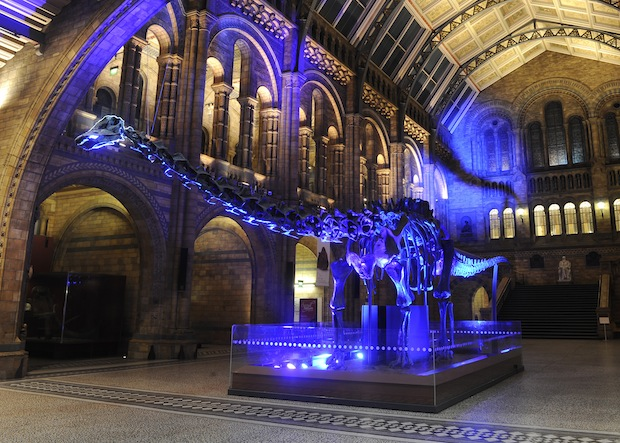 Dinosaur in Natural Museum Central Hall