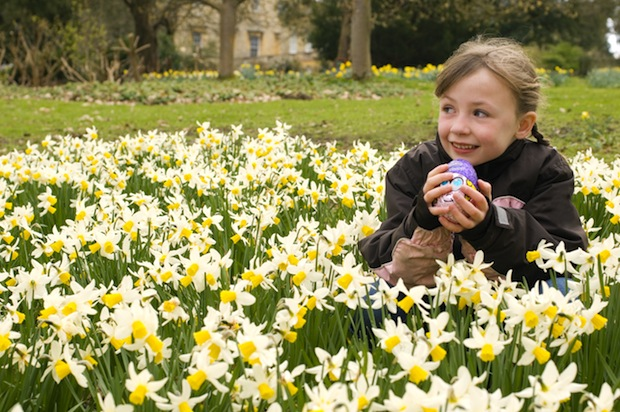 Child on an Easter egg hunt at Basildon Park, sponsored by Cadbury, Reading, Berkshire, during March