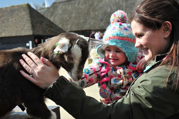 Kent Life - Child stroking goat