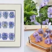 Laura-Ashley-Pressed-Flowers-Flowerona-Hero