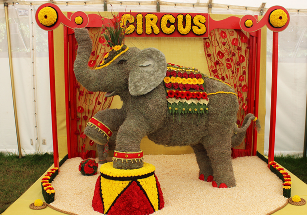 blog_circus