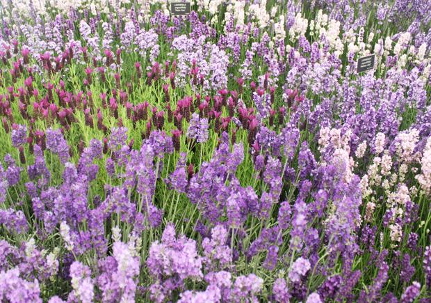 blog_flowermarquee2