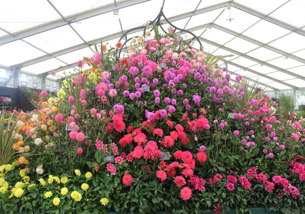 blog_flowermarquee7