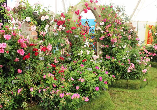 blog_roses3