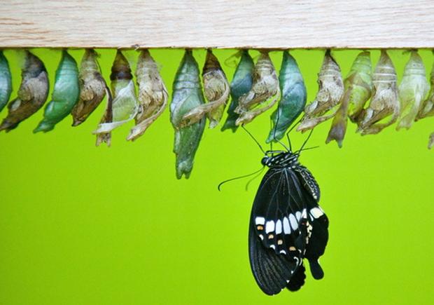 sensationalbutterflies