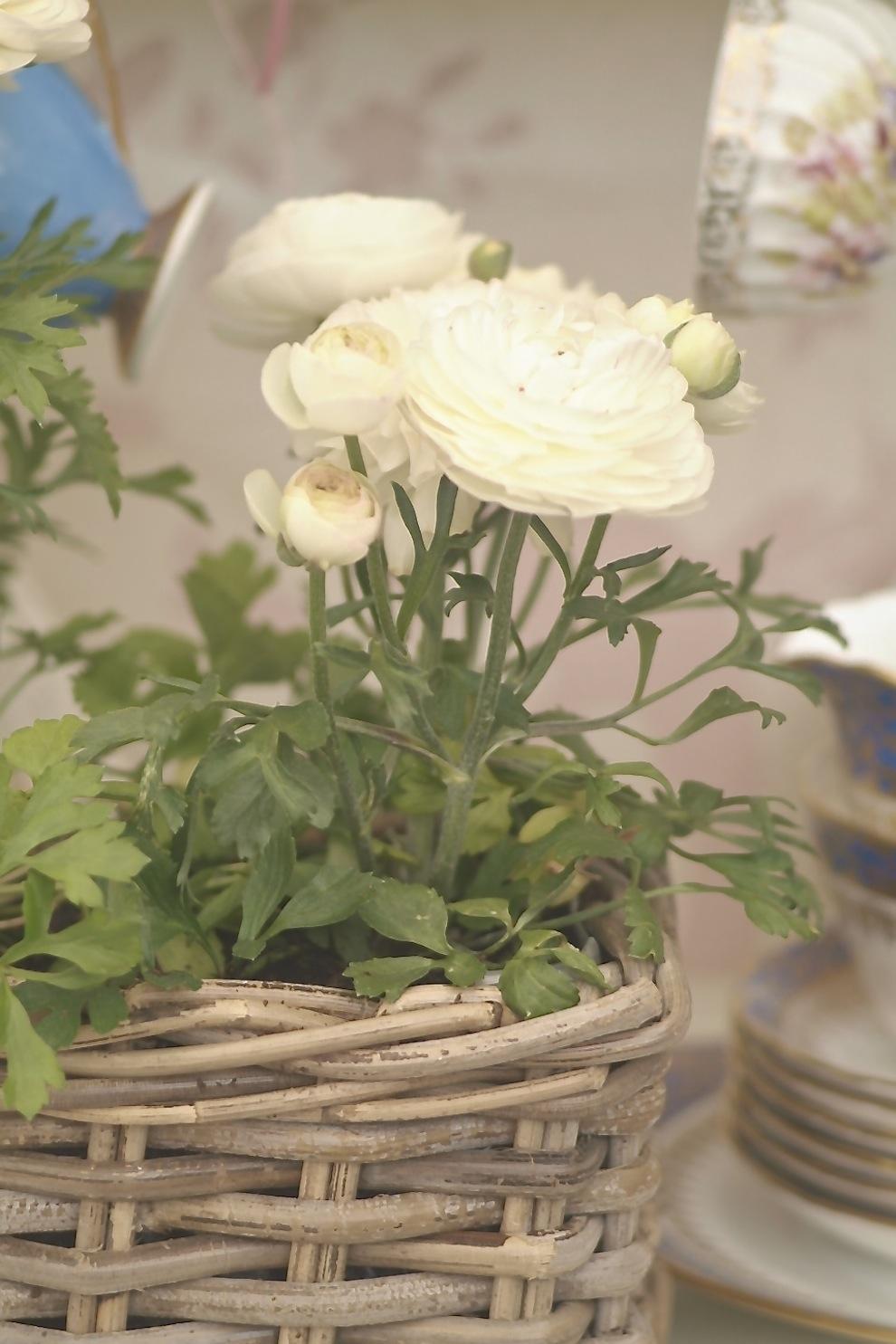 Indoor bloom 1