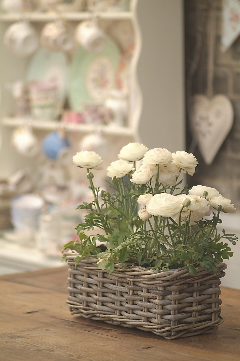 Indoor bloom 3