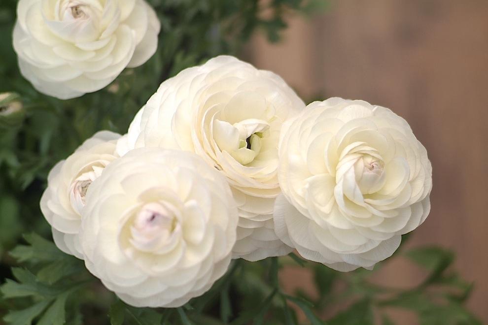 Indoor bloom 4