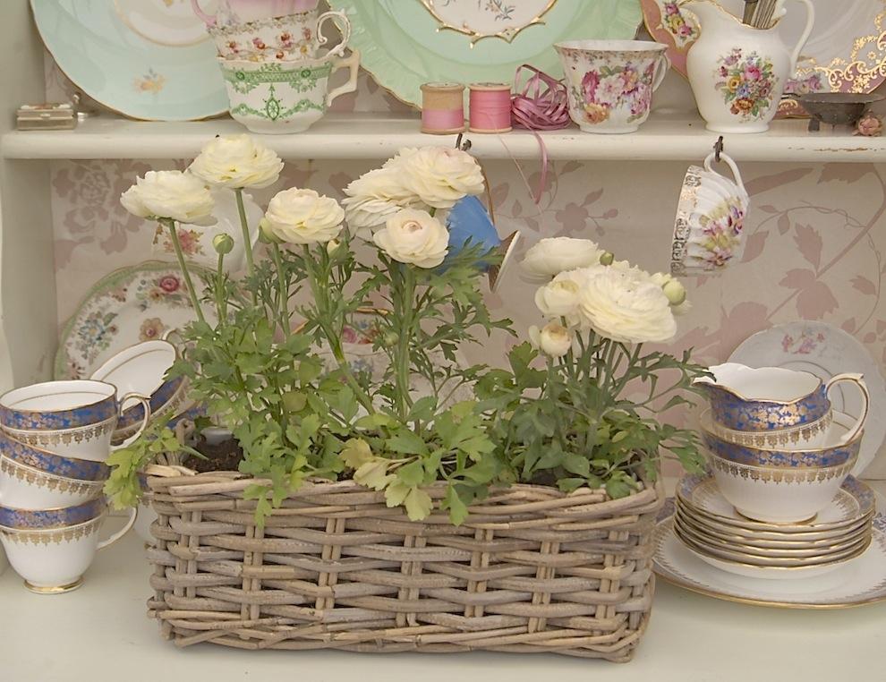 Indoor bloom 5