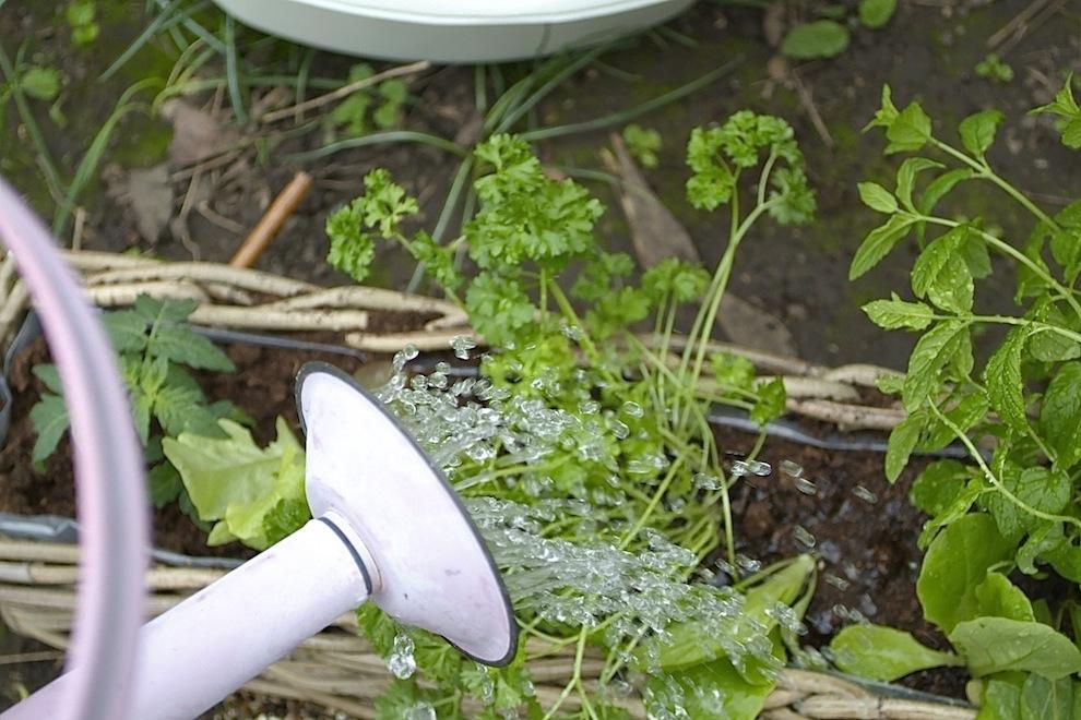 Kubu Planter 3