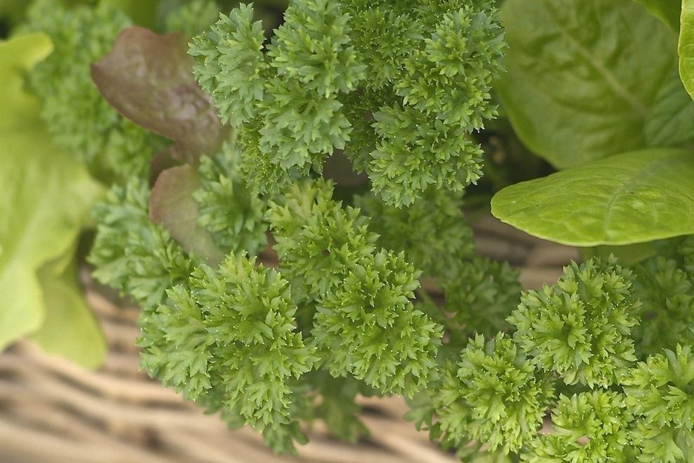 Kubu Planter 7