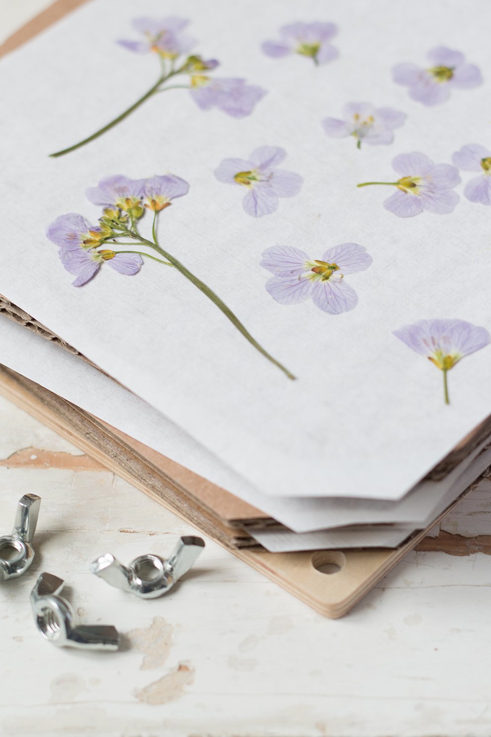 Pressed Hedgrow Flowers_Laura Ashley_8