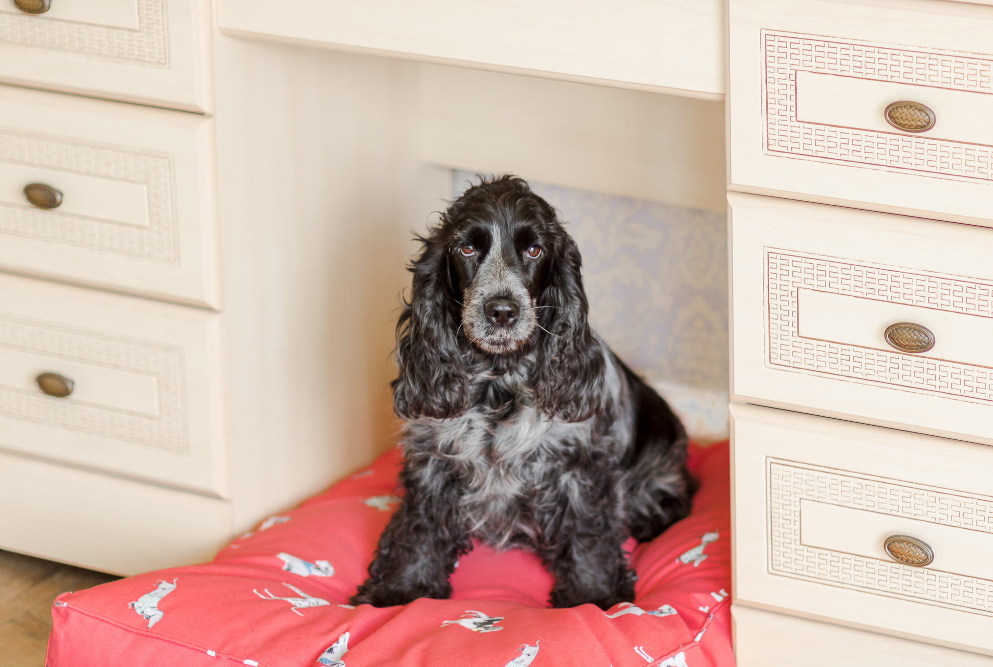 Creating a stylish interior space for your dogs