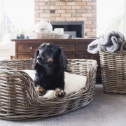 Tips for styling a home with indoor dogs